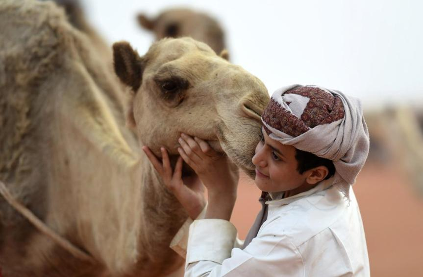 Scandal And Outrage At Saudi Camel BeautyShow