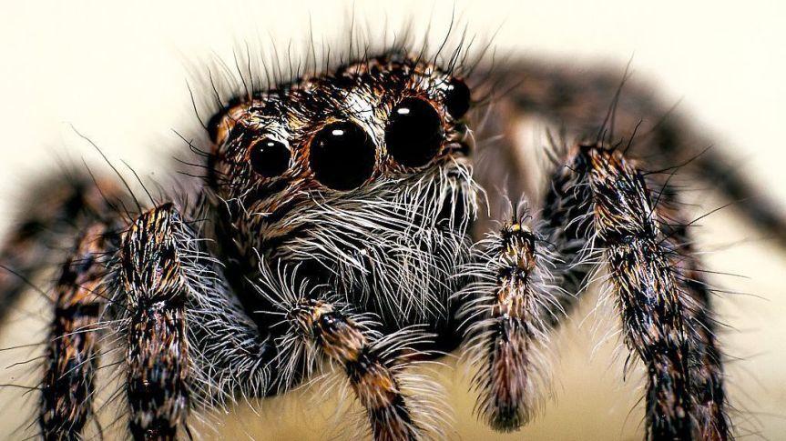 New Spider Species Found In CzechRepublic